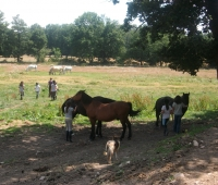 equitation-lozere-evasion-3.jpg