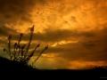 Digitale sur fond d'azur - Lozère Évasion © Leo Gayola