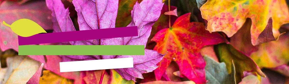 slider-automne